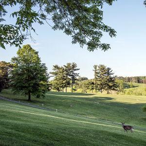 W. Virginia Hills with deer